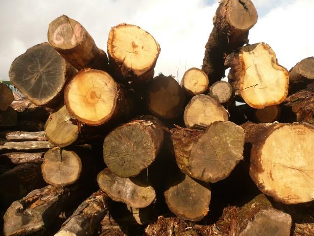 Pile of logs www.thinkingcowgirl.wordpress.com