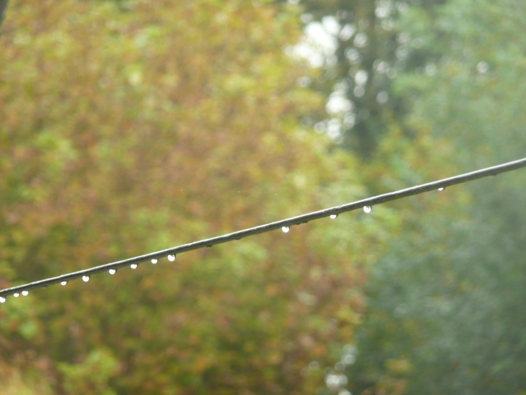 Rain Droplets on Wire  www.thinkingcowgirl.wordpress.com