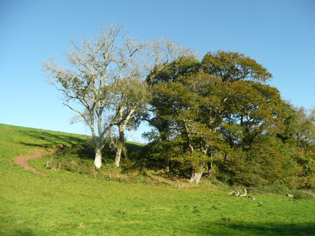Knoll with Trees North Cornwall
