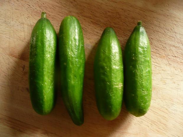 Cucumbers on Board www.thinkingcowgirl.wordpress.com