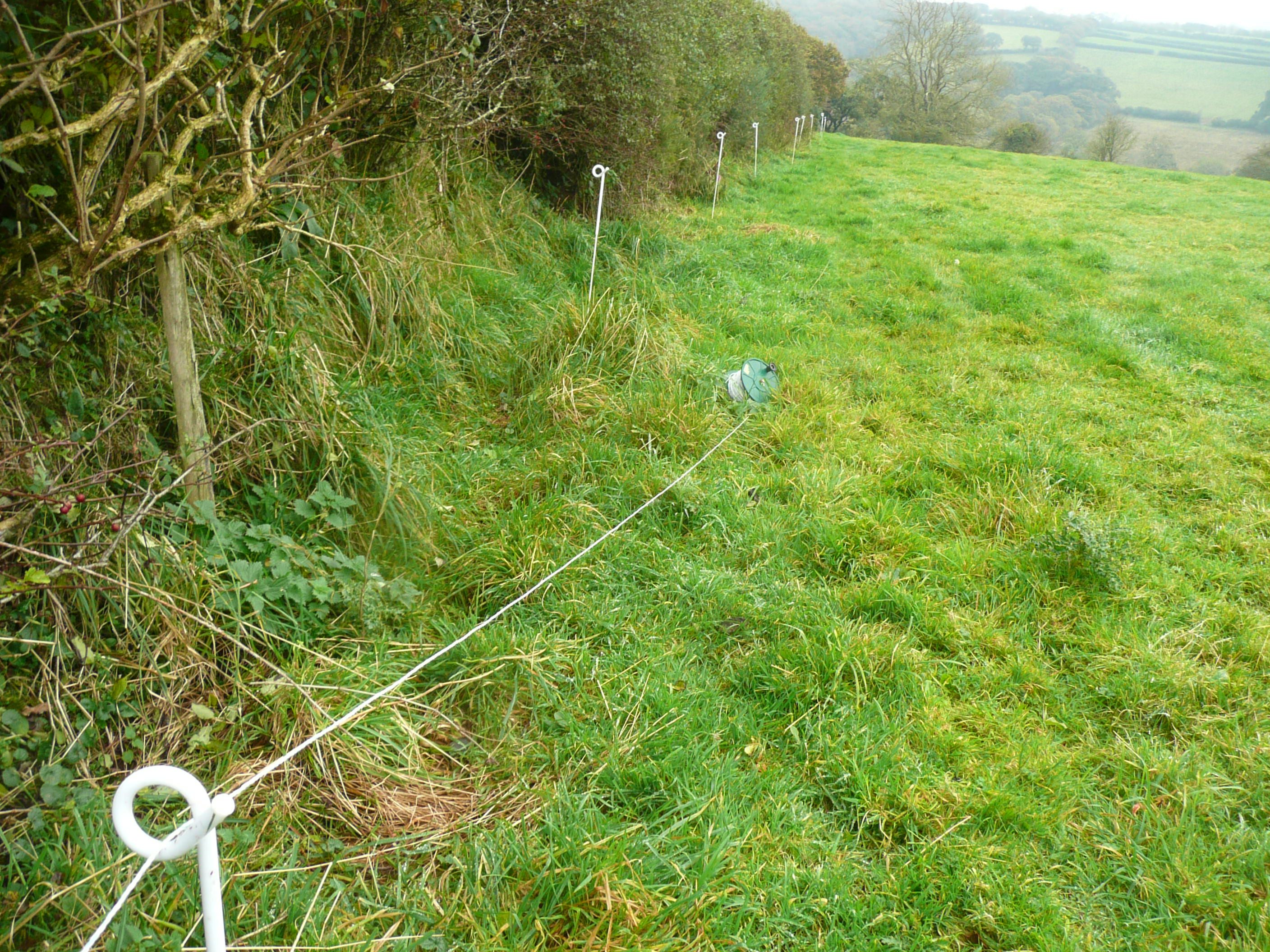 Electric fencing thinkingcowgirl
