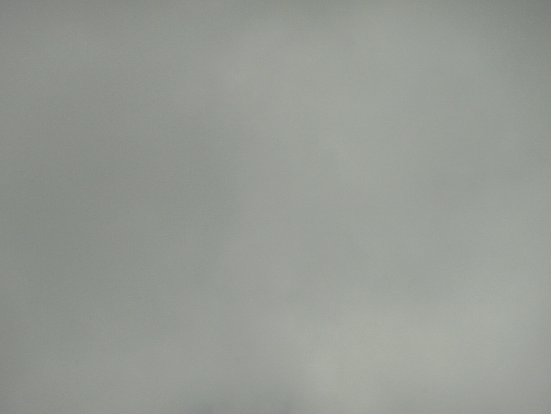 solid light gray wallpaper