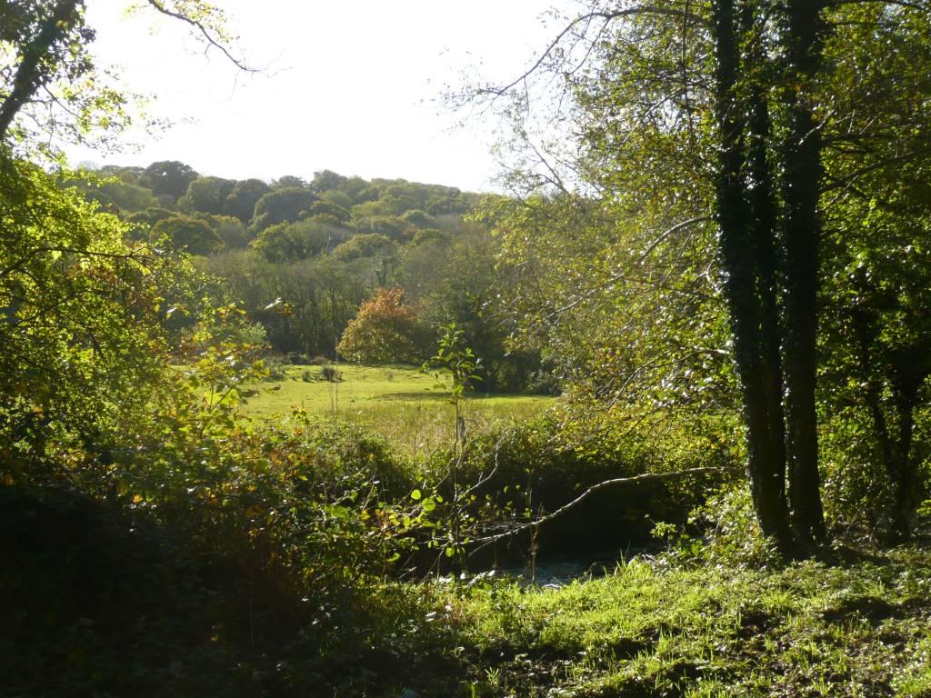 River Meadows North Cornwall