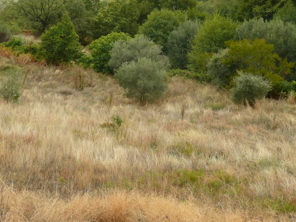Dry Meadow Spain www.thinkingcowgirl.wordpress.com