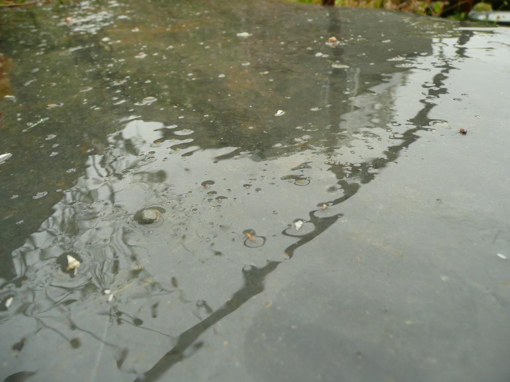 Rain on Slate Step  www.thinkingcowgirl.wordpress.com