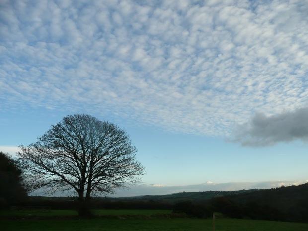 Winter Sky www.thinkingcowgirl.wordpress.com