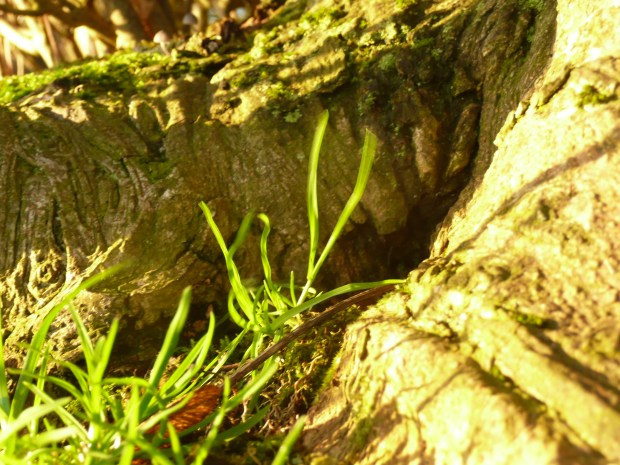 Blades of Grass, Tree Trunk www.thinkingcowgirl.wordpress.com