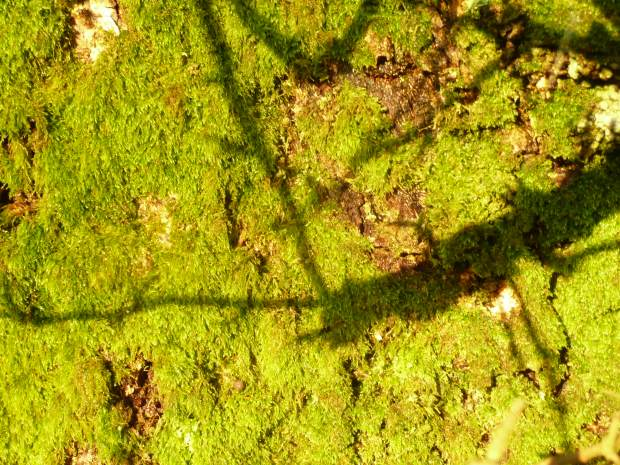 Mossand Shadows