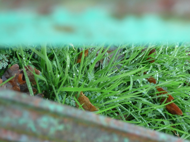 Blades of Grass, Flaking Paint