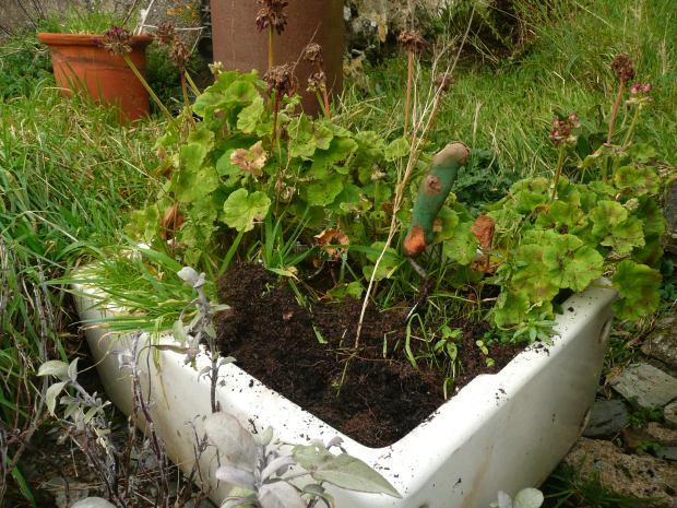 Belfast Sink with Plants  www.thinkingcowgirl.wordpress.com
