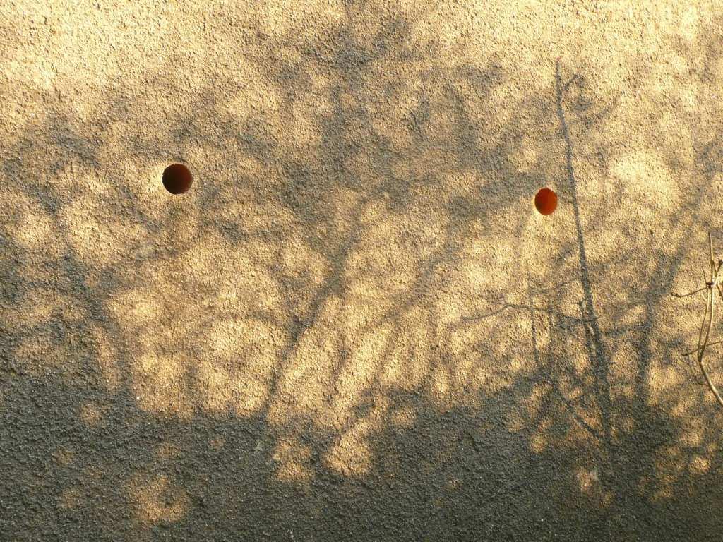 WinterTree Shadows  www.thinkingcowgirl.wordpress.com