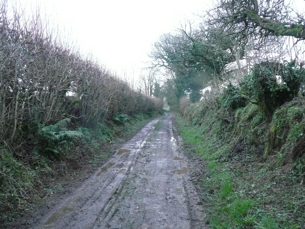 Muddy Lane Cornwall www.thinkingcowgirl.wordpress.com