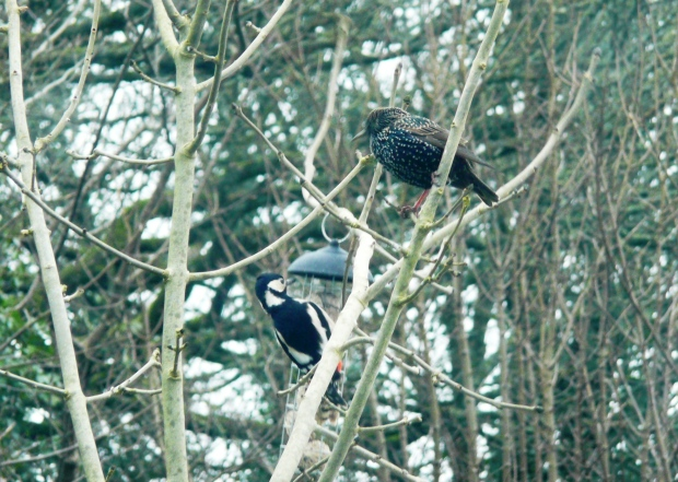 Managed to snap the woodpecker