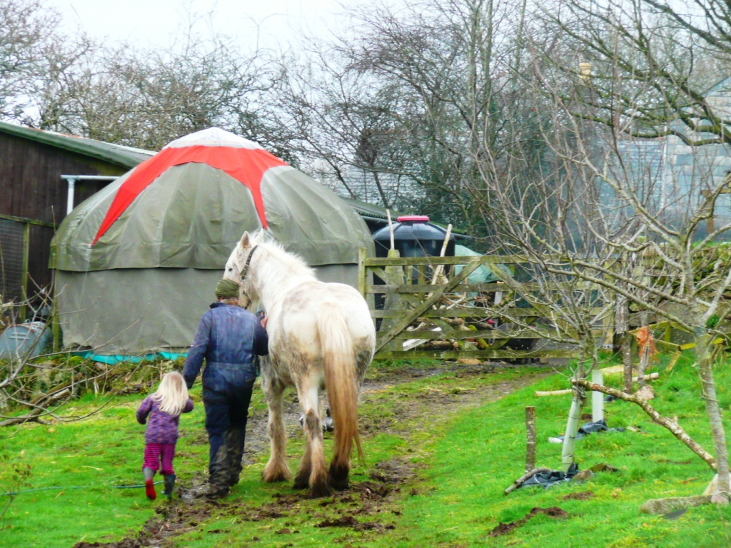 Shire Horse with Yurt