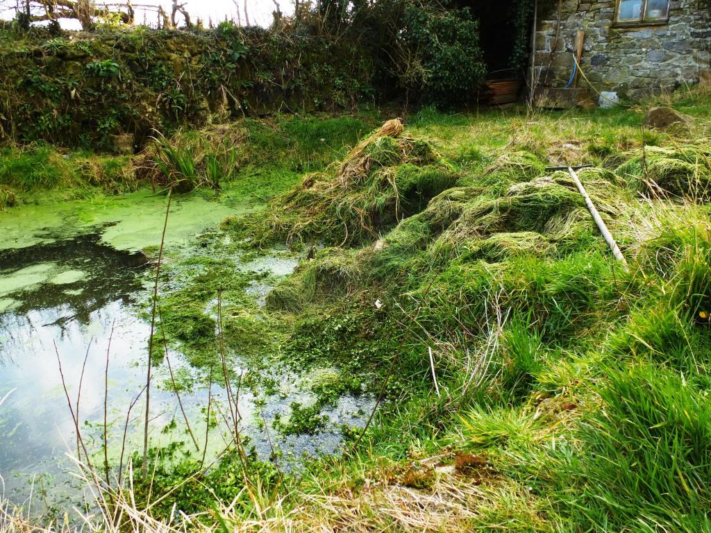 Wildlife Pond www.thinkingcowgirl.wordpress.com