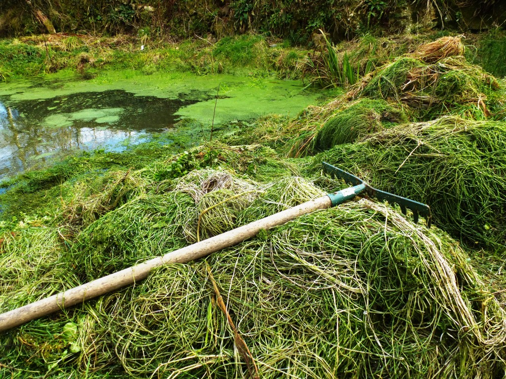 Pond Weed Clearing www.thinkingcowgirl.wordpress.com
