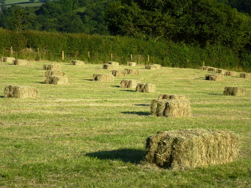 Hay Bales www.thinkingcowgirl.wordpress.com