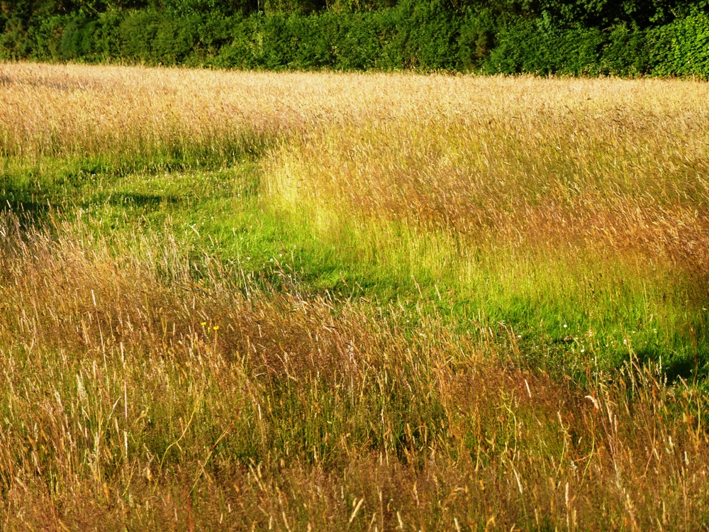 Path through long grass www.thinkingcowgirl.wordpress.com
