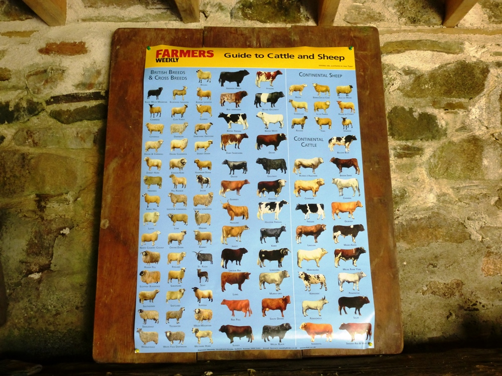 Livestock breeds poster in barn www.thinkingcowgirl.wordpress.com