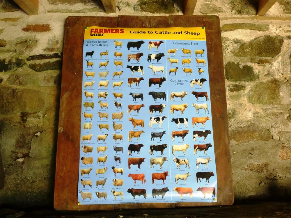 Livestock breeds poster in barn www.thinkingcowgirl.wordpress.com