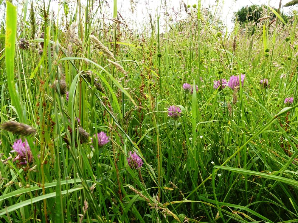 wild meadow www.thinkingcowgirl.wordpress.com