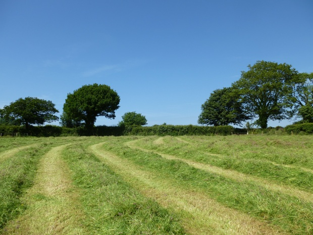 Cut Hay Field www.thinkingcowgirl.wordpress.com