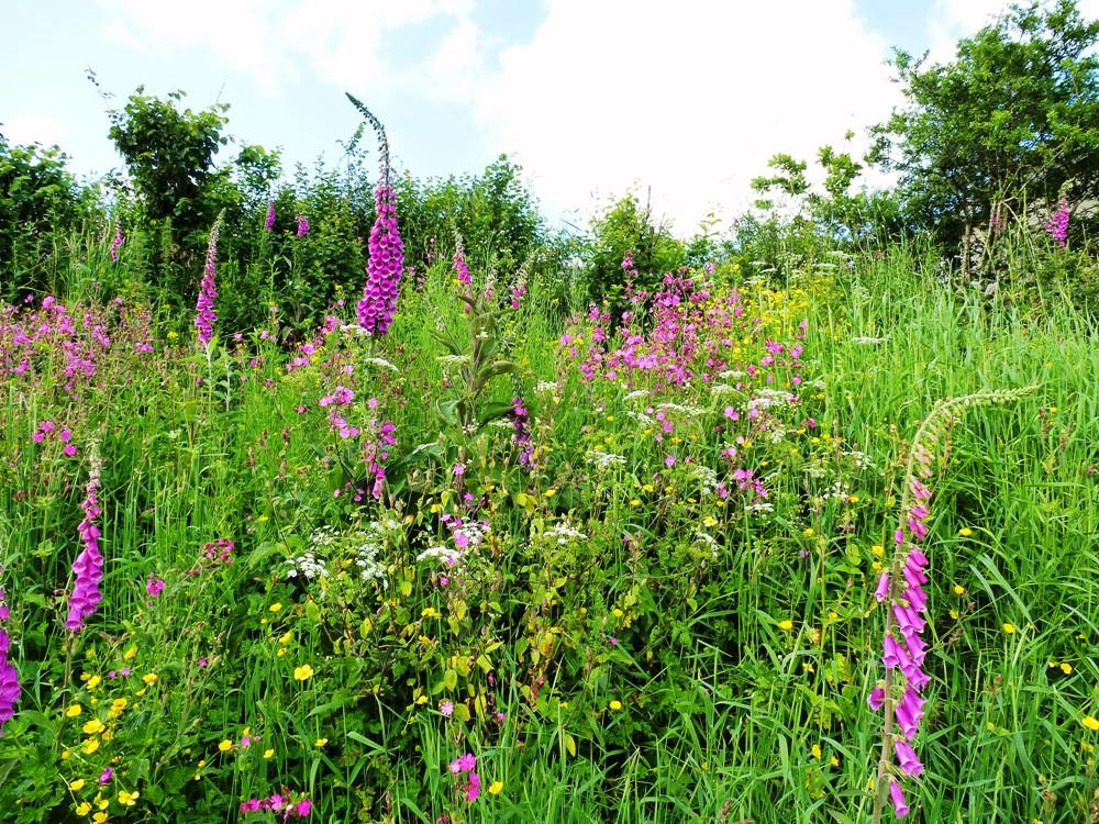 Wildflower Bank www.thinkingcowgirl.wordpress.com