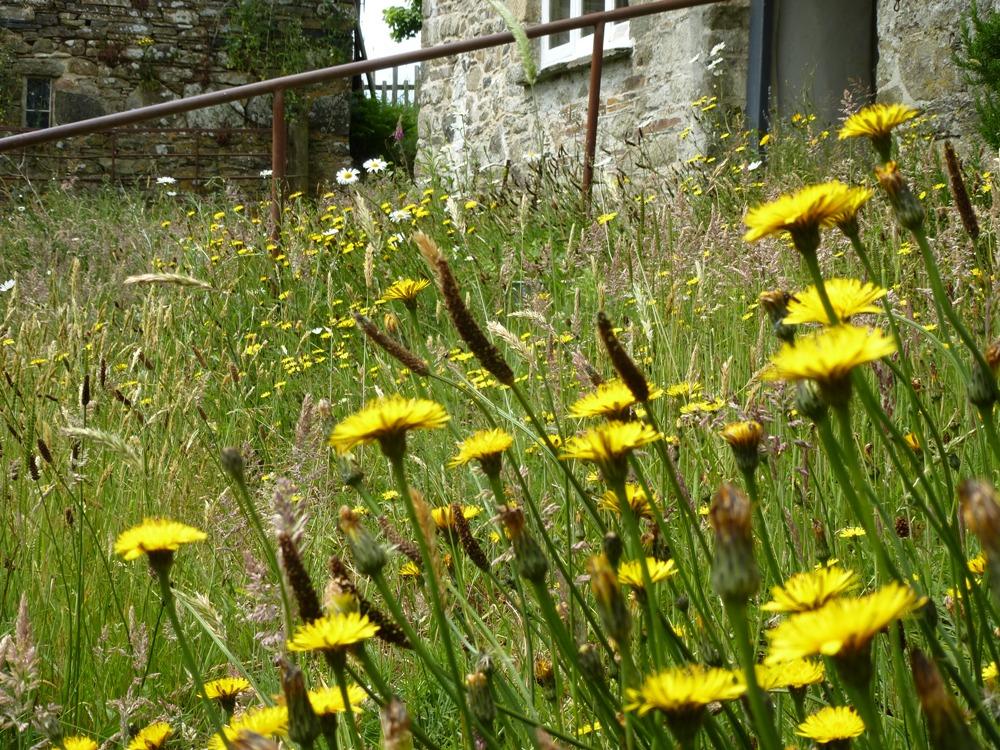 wild flowers www.thinkingcowgirl.wordpress.com