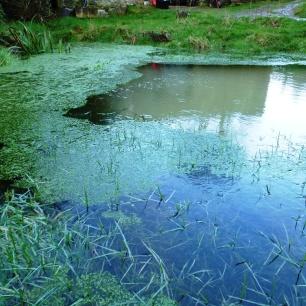 Winter Pond www.thinkingcowgirl.wordpress.com